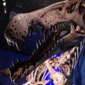 恐竜博2016 @国立科学博物館(かはく) 恐竜大好き!な研究者たちの大盤振る舞い